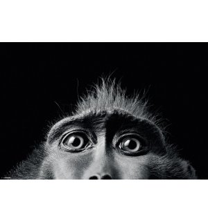 Plagát - Tim Flach (Monkey Eyes)