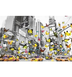 Fotoobraz - Manhattan butterfly
